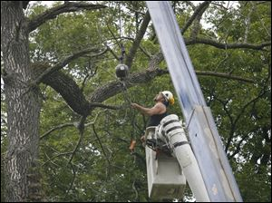 Steve Floro of Blanchard Tree and Lawn attaches a cable to a branch that will be cut on Hawthorne Road in Ottawa Hills.