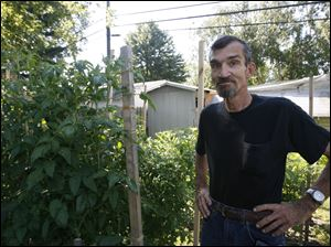 "Jeff Malewski, six foot, three inches tall, standing next to ""Mortgage Lifters"" an heirloom tomato which he planted from seeds."