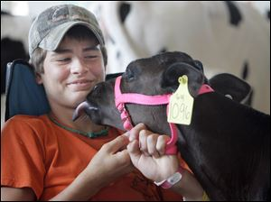 Allen Goretski, 13, of Carleton, Mich., gets an affectionate lick from a friend's 2-month-old heifer during Kids Day at the Monroe County Fair.