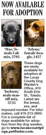 Lucas-County-Dogs-for-Adoption-09-17