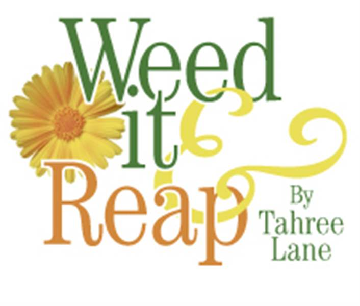Weed-It-Reap-Gardening-keeps-Diane-O-Connell-stress-free-2