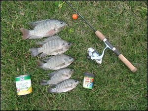 A 49-cent can of corn is all you need to catch the chunky blue tilapia, but you can spice it up with any of the Berkley Gulp! baits.