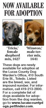 Lucas-County-Dogs-for-Adoption-10-07
