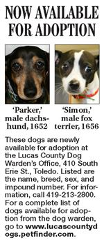 Lucas-County-Dogs-for-Adoption-10-14