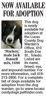 Lucas-County-Dogs-for-Adoption-10-20