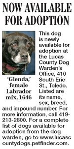 Lucas-County-Dogs-for-Adoption-10-27