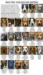Lucas-County-Dogs-for-Adoption-11-14