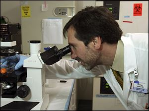 Dr. Antoni Ribas views cancer cells through a microscope.