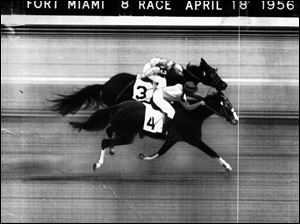 The eighth race at Fort Miami Fairgrounds on April 18, 1956, was a photo finish. The white line is drawn to show the nose of the No.4 horse reaching the finish line first.