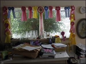 Orchid show ribbons won by Ron Ciesinski decorate the greenhouse office.