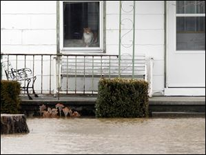 A cat sits in a window of a home at 10193 Hancock County Road 180 southeast of Findlay and peers at the flood waters.
