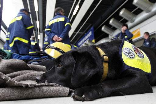 Japan-Aftermath-search-rescue-dog-Pia