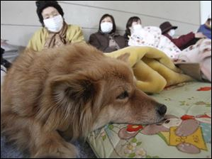 A family takes a rest with their pet dog on Monday at a shelter at Minamisanriku town, Miyagi Prefecture, northern Japan.