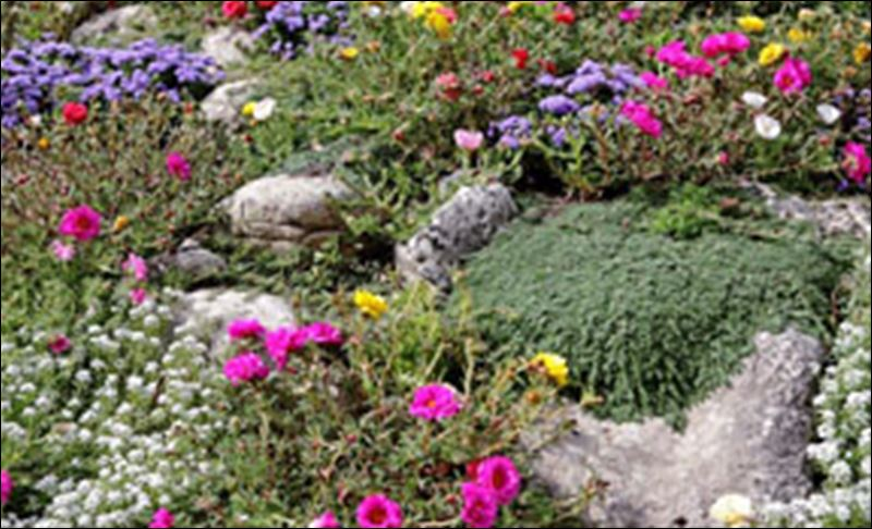 Ground cover plant maintenance schedule low maintenance ground cover