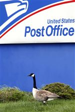 Fowl-family-afoot-at-post-office