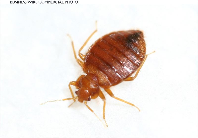 How Are Bed Bugs Eradicated