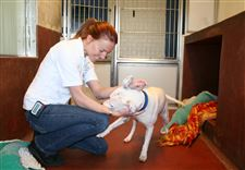 claire-porteous-battersea-animal-welfare-manager