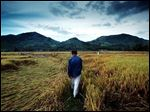 Kieu Trac walks through a Song Ve Valley rice paddy in June, where his father, Kieu Cong, and other farmers were killed by Tiger Force soldiers 36 years ago.