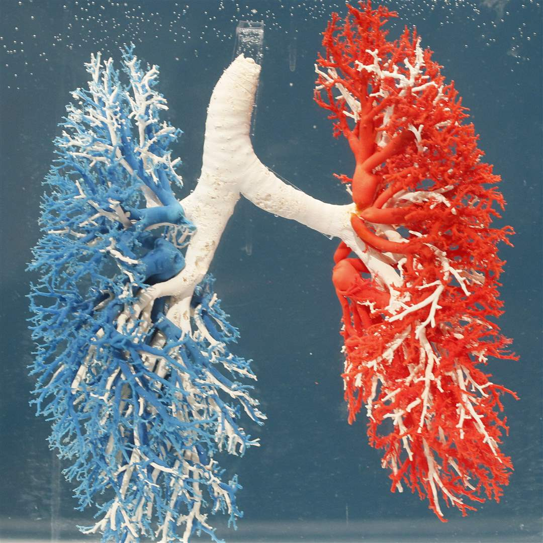 Bodies-Revealed-Exhibit-blood-vessels-and-lungs