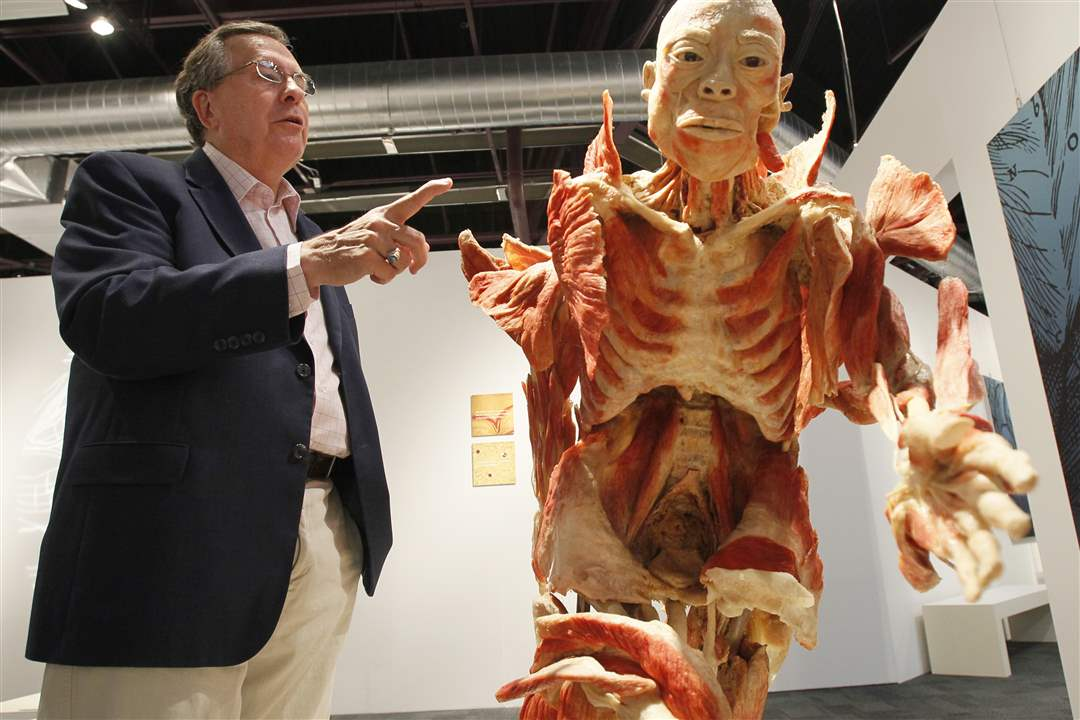 Bodies-Revealed-Exhibit-Dr-Roy-Glover-and-muscle-layering