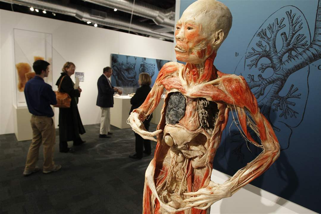 Bodies-Revealed-Exhibit-damaged-lungs