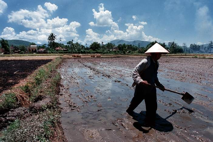 A-farmer-works-his-rice-field-during-the-intense-heat-and-sun-of-an-afternoon-in-the-Song-Ve-Valley-Quang-Ngai-Province-Vietnam