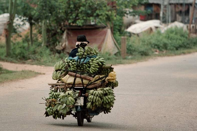 Bananas-are-delivered-by-motorbike-in-the-Song-Ve-Valley