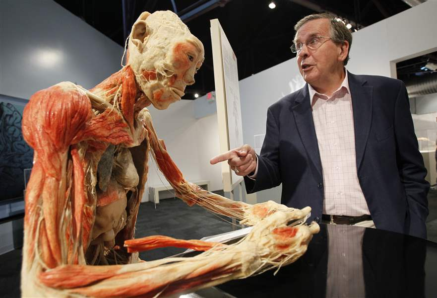 Bodies Revealed Exhibit Is Anatomy Lesson Up Close The Blade