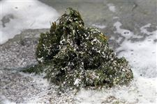 Toxic-forms-of-algae-staying-longer-at-beaches