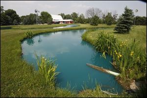 Fin Farm raises fish in 20 ponds, including this one, on its 15 acres in Ridgeville Corners.
