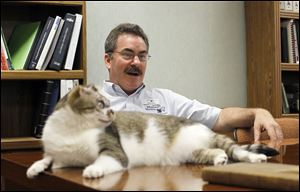 Agency mascot George the cat lounges on the desk of John Dinon, executive director of the Toledo Area Humane Society. George was taken in after Halloween in 2009 with severe burns on his face.
