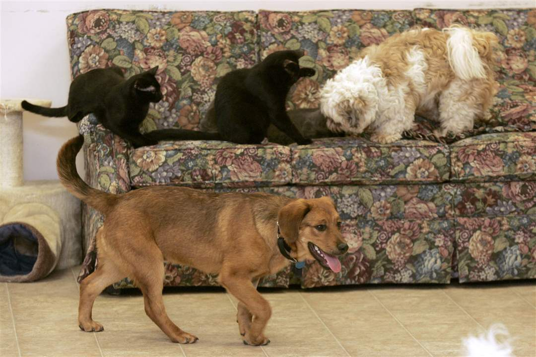 Dogs-and-cats-at-play