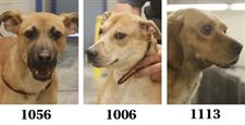 Dogs-for-adoption-7-15