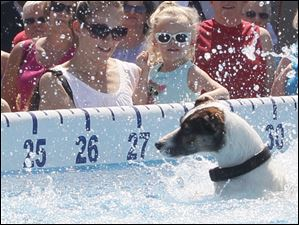 Tracy, left, and her daughter Ashley, 4, of Holland, watch as Jitter Bug swims to the ramp after diving. Jitter Bug is the dog of Milt and Cathi Wilcox, of Jacksonville, Fla. Milt is the president and main announcer and Cathi serves as secretary of Ultimate Air Dogs.