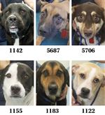 Dogs-for-adoption-7-21