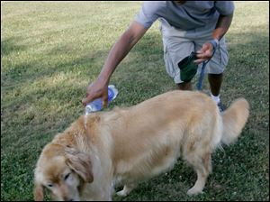 Larry Parks of Northwood cools off his dog Rocky in a park behind Lark School.