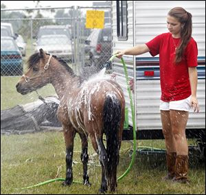 "Autumn Gilbert, from Erie, Mich., hoses down her pony ""Buckwheat"" before he gives children rides with other ponies at the Lynda's Pony Rides tent during the Ottawa County Fair in Oak Harbor on July 19, 2011. ""Usually [the ponies] dance around and are antsy but since it is so hot they are enjoying [the shower],"" Gilbert said."