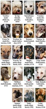 Dogs-available-for-adoption-July-23