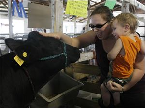 Seven-month-old Jace Drummond gets a close look at a Holstein cow as Sarah Drummond gives it a pat on the head.