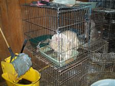 Authorities-found-filthy-dogs-in-cages