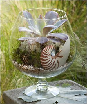 Terrariums today can be open, allowing for air to flow freely, and they incorporate unusual living and non-living components.