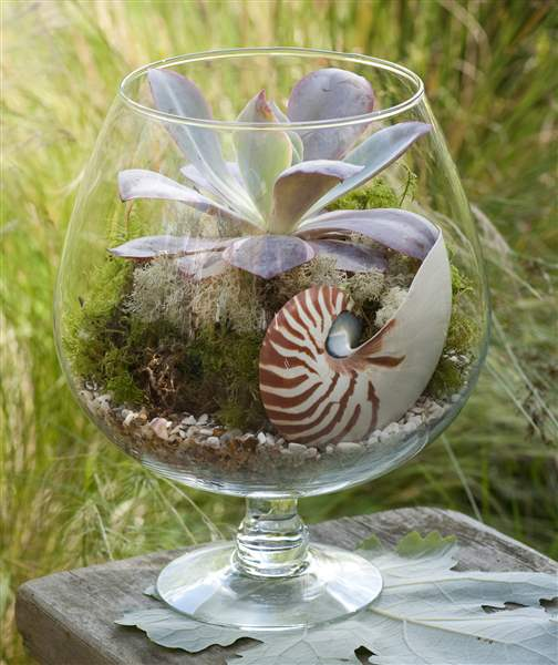 Terrariums Today Can Be Open, Allowing For Air To Flow Freely, And They  Incorporate Unusual Living And Non Living Components.