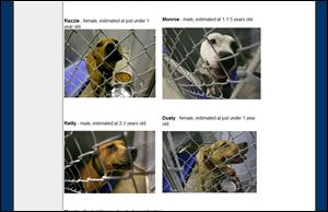 An image from the Monroe Society for the Prevention of Cruelty to Animals Web site shows photos of the dogs rescued from the Ida Maybee road home.
