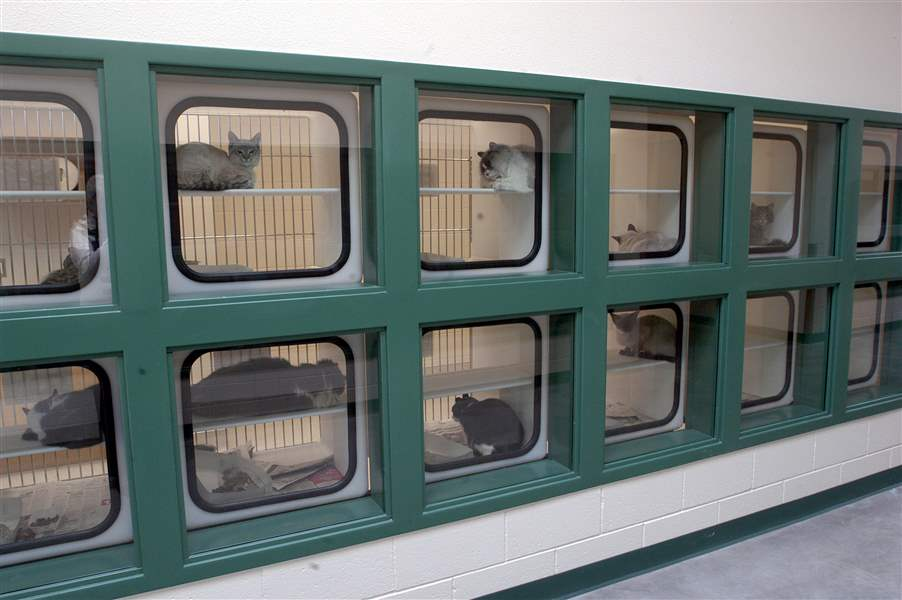 Cats-in-cages-at-Washoe-County-Regional-County-Animal-Control-center