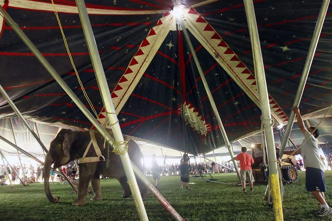elephant-sets-up-the-tent