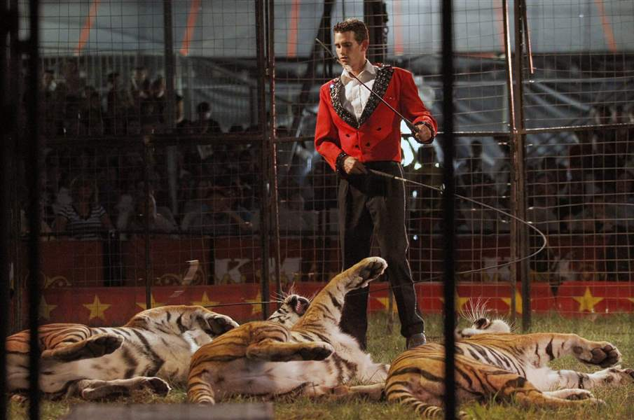 tiger-trainer-kelly-miller-circus-08-13-2011