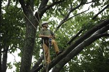 Arborist-Mark-Trautman