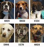Dogs-for-adoption-9-17