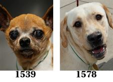 dogs-adoption-09-22
