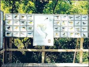 Warbler panels at Magee Marsh Bird Trail display Bill Kuhlman's illustrations.